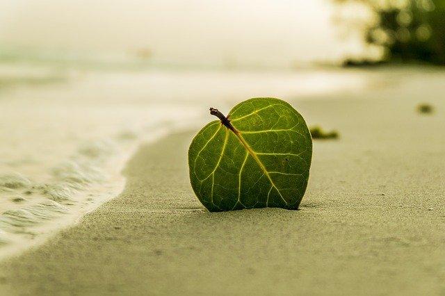 Les plages à PACA : un coup de soleil interminable